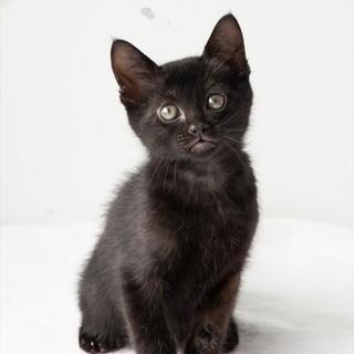 黒子猫 リネン君 里親様募集♡