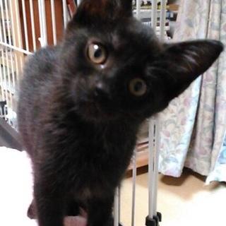甘えん坊クロネコ♀3ヶ月