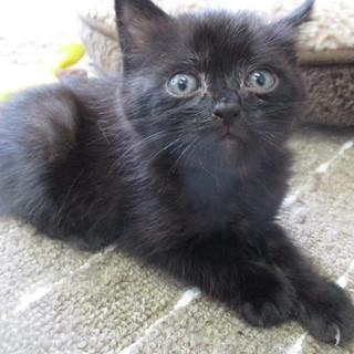 センターからレスキューした可愛い子猫