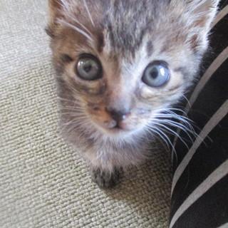 離乳食口にするようになりました☆可愛い子猫