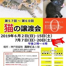 猫の譲渡会in神戸三宮 ¨ 猫のミーナ ¨ サムネイル1