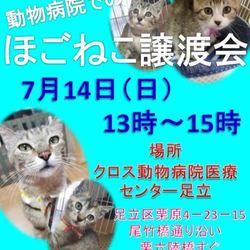 【7/14(日)】ねこに優しい動物病院でのほごねこ譲渡会