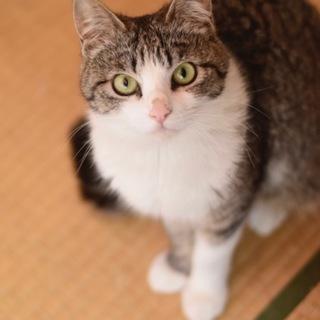 美猫のリル!