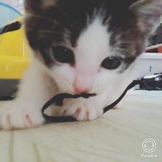 子猫の里親