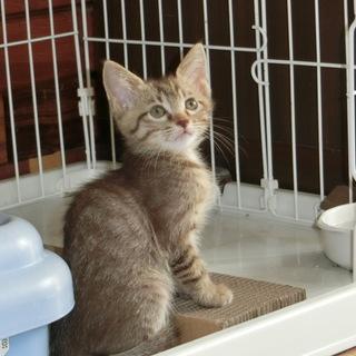 美形の子猫ちゃんと 個性的な子猫ちゃん