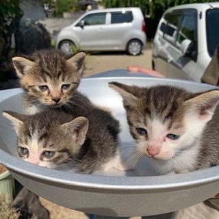仔猫7匹各里親募集