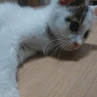 甘えん坊の子猫です