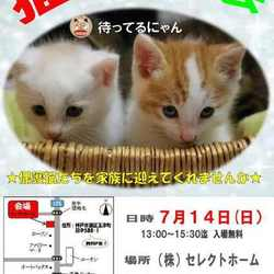 7月14日、神戸市西区玉津にて、譲渡会を開催します。