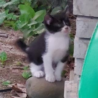 目がおおきくて可愛い猫ちゃんです