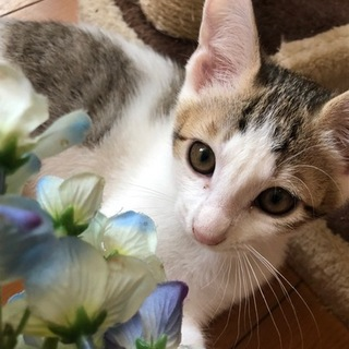 福岡市西区より4匹の元気な子猫