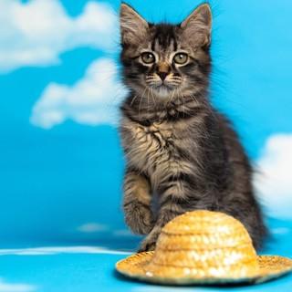 可愛い子猫優しい家族を募集中