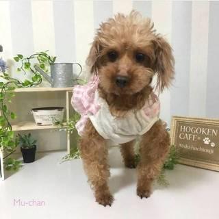 ムー★お膝大好き癒し系MIX犬♀
