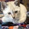 シャム猫風の可愛い女の子❤️