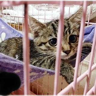 生後約2ヶ月の女の子★兄弟猫【B】