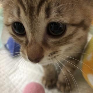 天真爛漫で、猫も人も大好き、小夏ちゃん