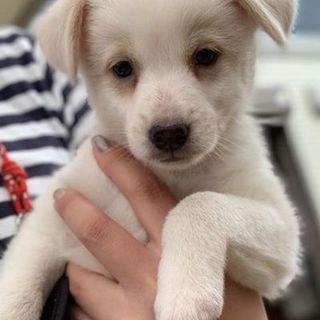 生後3ヶ月の雑種の子犬♂ 人懐こくて元気いっぱい