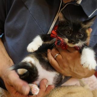 奄美のエビネ、人も猫も大好き!医療済