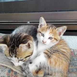 三毛猫♀とキジ猫♂の子猫