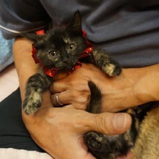 奄美のボタン、人も猫も大好き!医療・しつけ済