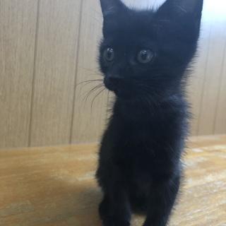 黒猫女の子生後約2ヶ月