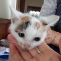 小さな兄妹子猫の里親さん募集中