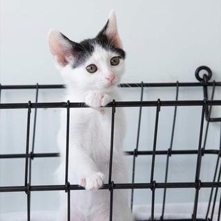 白黒子猫 カマンちゃん 里親様募集♡