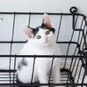 白黒子猫 カマンちゃん 里親様募集♡ サムネイル6