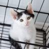 白黒子猫 カマンちゃん 里親様募集♡ サムネイル7