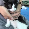 白黒子猫の咲太郎くんです♪