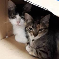 「保護猫ちゃんたち」サムネイル1