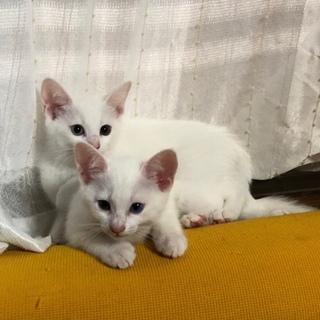 白猫兄弟 動画あります