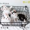 白黒子猫 モッツ君 里親様募集♡ サムネイル7