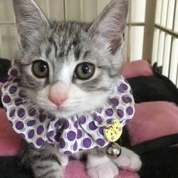 *幸せ探しのネコ譲渡会*子猫〜 サムネイル2