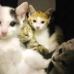 *幸せ探しのネコ譲渡会*子猫〜 サムネイル3