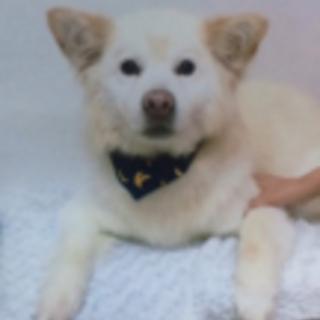 行き場を失った穏やかな中型犬