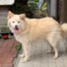 行き場を失った穏やかな中型犬 サムネイル2