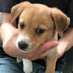 東京新宿『犬だけの譲渡会』