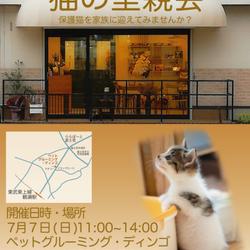 埼玉県富士見市    猫の里親会