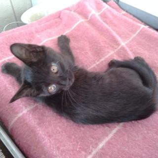 毛並みの良い黒猫です