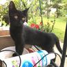 人懐っこい黒猫姉妹