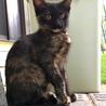 人懐っこい黒猫姉妹 サムネイル2