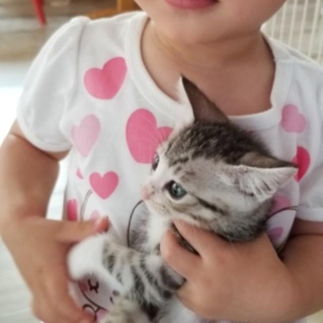猫幸の家のカバー写真