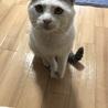 甘えん坊猫ちゃん! サムネイル2