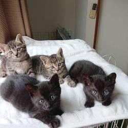 7月6日子猫の譲渡会@茨木市のお知らせ