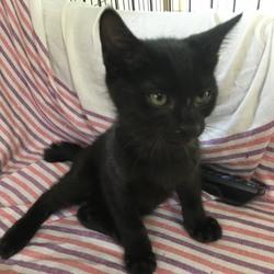「7月6日子猫の譲渡会@茨木市のお知らせ」サムネイル2