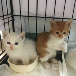 「7月6日子猫の譲渡会@茨木市のお知らせ」サムネイル3