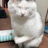甘えん坊猫ちゃん! サムネイル4