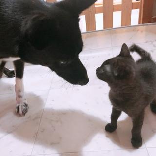 犬と人間が大好きな子猫くん、もちろん猫も!