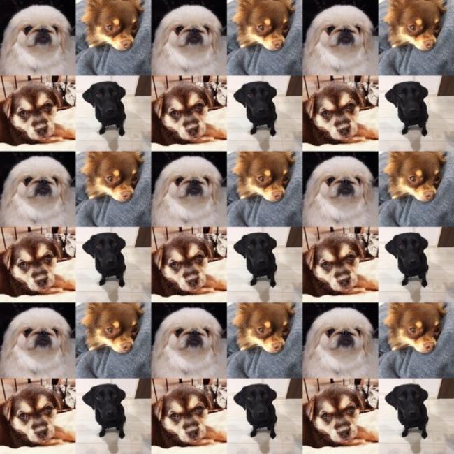 FF DOG CONNECTのカバー写真