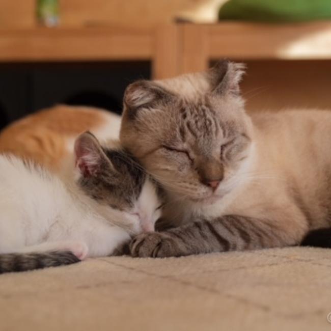 Sakai猫活のカバー写真